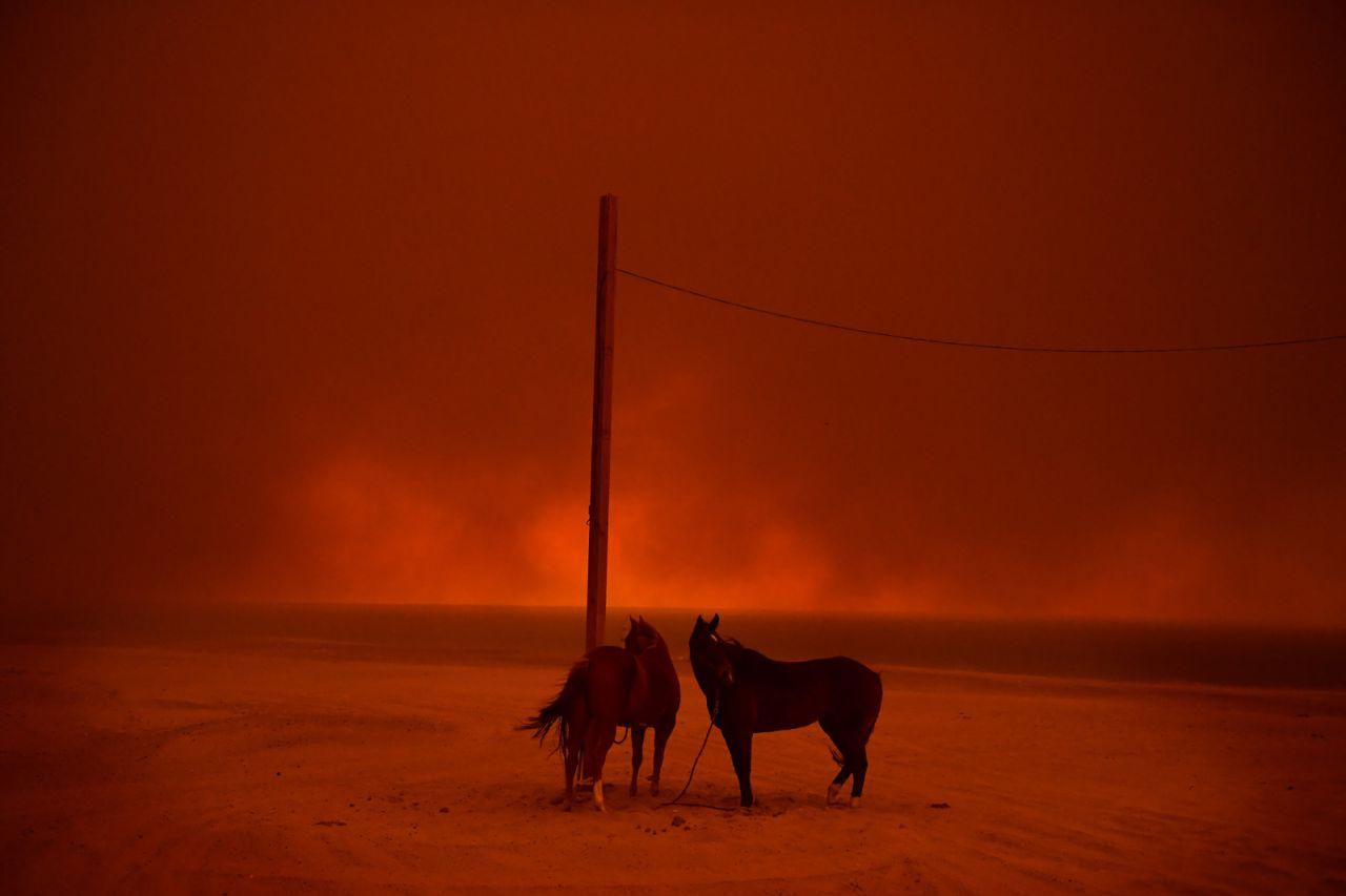 Los caballos evacuados permanecen atados a un poste, mientras el humo de un incendio forestal ondea sobre ellos, en la playa Zuma, en Malibú, California, EE. UU., El 10 de noviembre.
