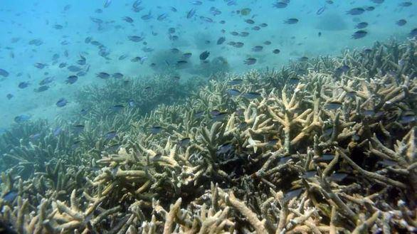 La Tierra 'grita' otra vez: nuevo blanqueo masivo en la Gran Barrera de Coral