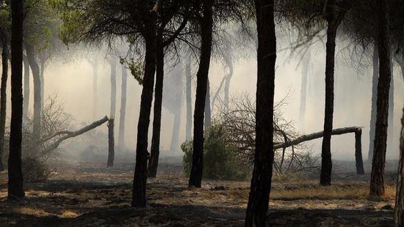 Un gran incendio alcanza el Parque de Doñana
