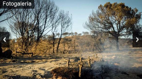 Galería. Las imágenes del incendio que amenaza Doñana