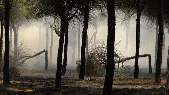 El descenso de incendios pone en peligro los ecosistemas