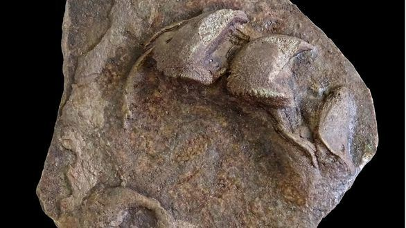 Halladas en Valencia algunas de las huellas de tortuga más antiguas del mundo