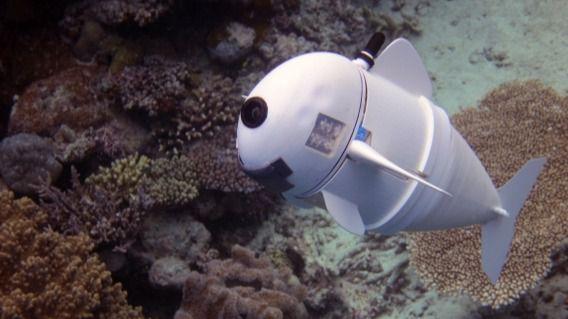 SoFi, el primer pez robot autónomo diseñado para estudiar la vida submarina