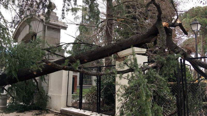 Muere un niño de 4 años tras caerle un árbol en El Retiro