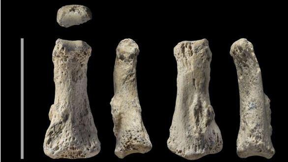 Hallado el fósil de Homo Sapiens más antiguo fuera de África y el Levante