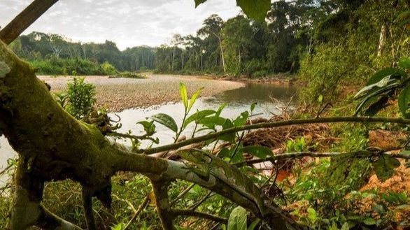 Sólo el 10% de las áreas protegidas está a salvo del deterioro humano