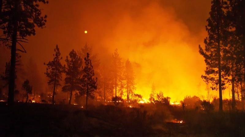 California, en llamas: ocho fallecidos y 93.000 hectáreas arrasadas