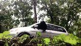 Vuelven de paseo y encuentran un oso dentro del coche