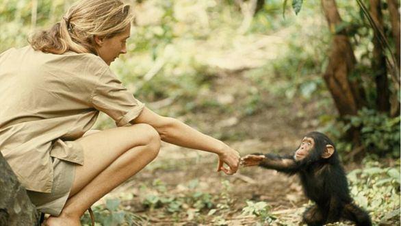 Encuentro con Jane Goodall en el Espacio Fundación Telefónica