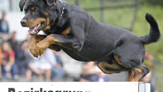 Imputado por homicidio imprudente el dueño de los perros que atacaron a un anciano en Madrid