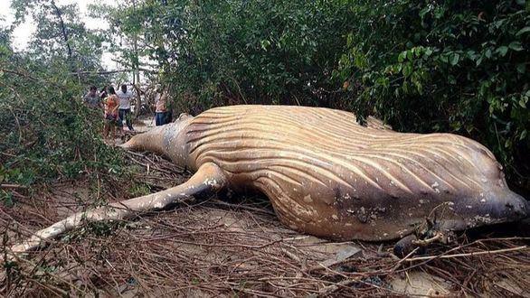 Hallan una ballena de ocho metros en plena selva del Amazonas