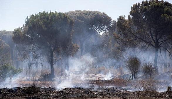 El incendio que amenaza Doñana, al fin,