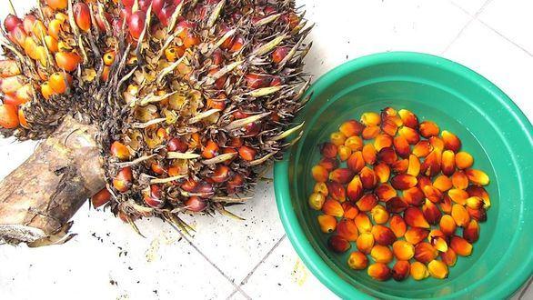 La Comisión Europea apuesta por las certificaciones de sostenibilidad en el aceite de palma
