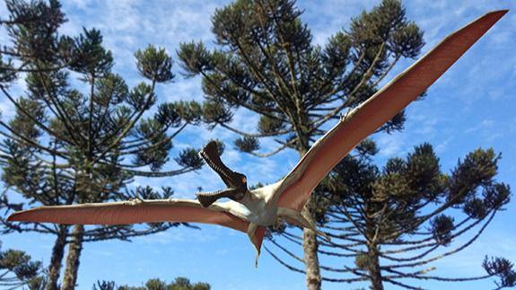 Hallados restos de una nueva especie de reptil volador prehistórico en Australia