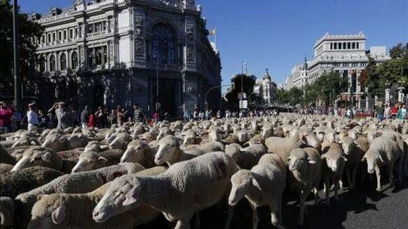 La Fiesta de la Trashumancia regresa a Madrid y provocará cortes de tráfico