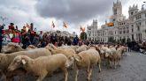 La Fiesta de la Trashumancia conquistó el centro de Madrid este domingo