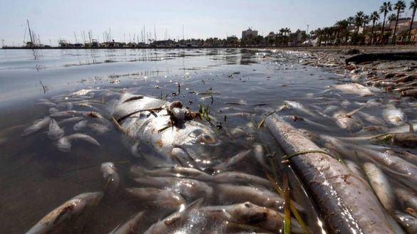Murcia se compromete a tomar medidas urgentes para salvar el Mar Menor