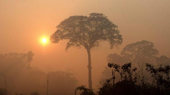 La deforestación en la Amazonía se dispara igual que la presión a Bolsonaro