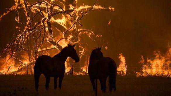 Miles de australianos protestan por los incendios que están arrasando su país