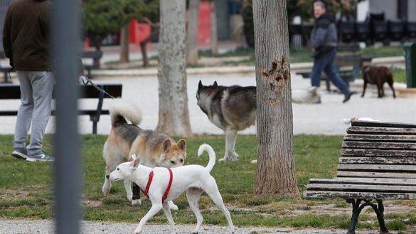 Denunciado por alquilar sus perros para pasear durante el estado de alarma