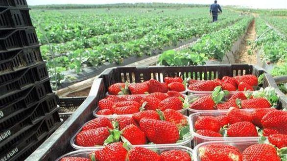 El campo español necesita 150.000 trabajadores para no perder las cosechas