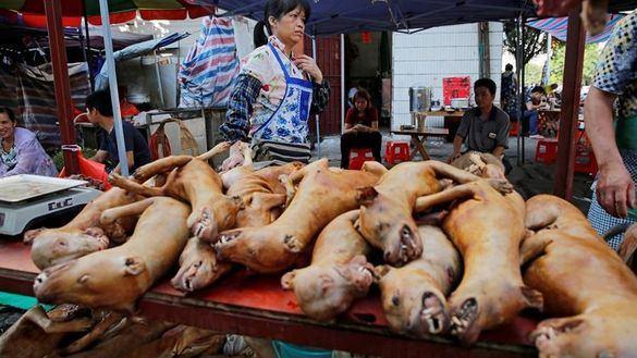Shenzhen, en China, prohíbe comer perros y gatos tras el coronavirus