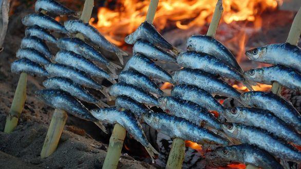 El 60% de las sardinas y anchoas del Mediterráneo contienen microplásticos
