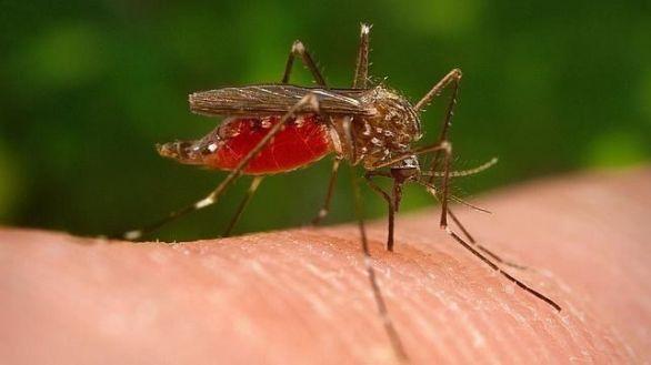 Con el verano llegan los mosquitos, pero calma: