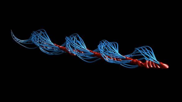 Al utilizar microscopía 3D, se ha visto que los espermatozoides no se mueven como una serpiente, sino que se desplazan en forma de tirabuzón.
