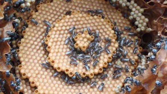 Desvelan los patrones matemáticos que siguen las abejas para fabricar sus panales