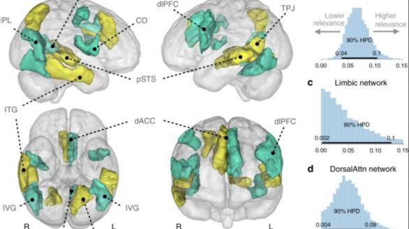 Científicos localizan la firma neuronal que permite visualizar la soledad