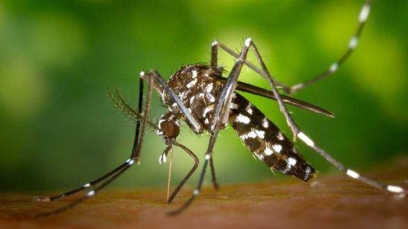 Desarrollan una herramienta capaz de identificar enfermedades víricas