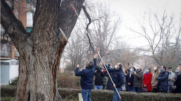 Madrid clonará los árboles centenarios y singulares dañados por la nevada