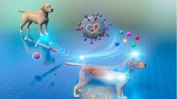 Nueva terapia con células madre en perros