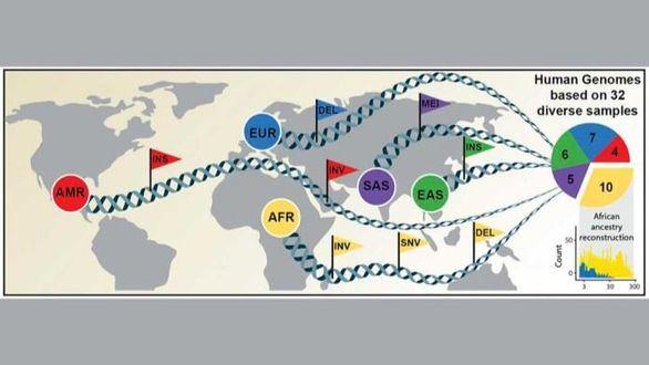 Nuevo avance: la diversidad genética se apoya en 64 genomas humanos