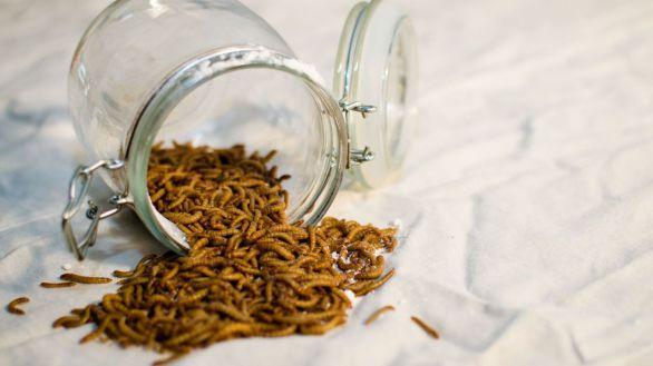 Un tratamiento a partir de harina fabricada con gusanos ayuda a prevenir la diabetes