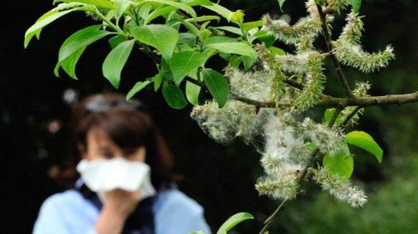 Las altas concentraciones de polen influyen en el aumento de infecciones por COVID