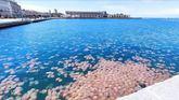 Un impresionante banco de medusas invade el puerto de Trieste