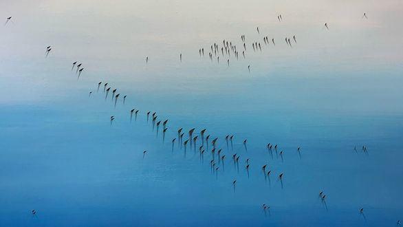El pintor Luis Agulló presenta su exposición Pájaros en la Fundación Pons