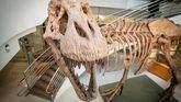 Unos 2.500 millones de T.rex vivieron en América del Norte durante el Cretácico