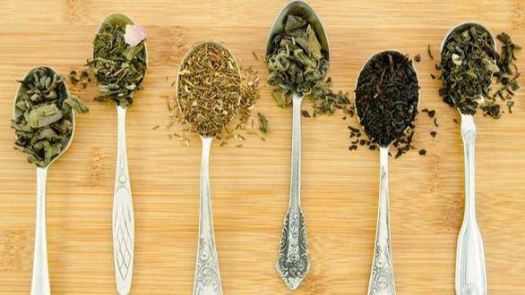 Un compuesto del té verde impulsa el desarrollo de nuevos fármacos contra el cáncer