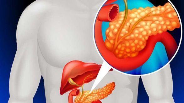 Creado el primer mini-órgano en 3D del páncreas