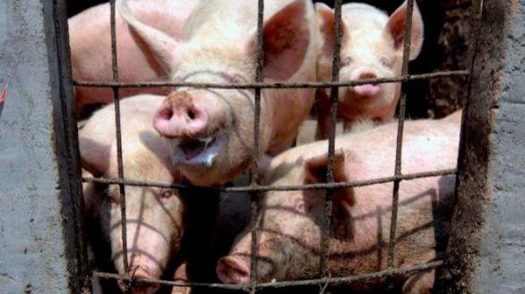 Más del 60% de las enfermedades que afectan a los humanos tiene origen animal