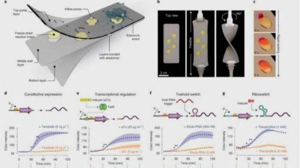 Una mascarilla 'inteligente' detecta la infección por SARS-CoV-2