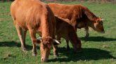 Indignación de los ganaderos y el sector cárnico con Garzón por sus ataques al consumo de carne