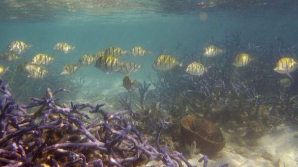 Los arrecifes de coral se mueren: su cobertura ha caído a la mitad desde 1950