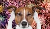 Un medicamento consigue que los perros no pasen miedo al oír explosiones
