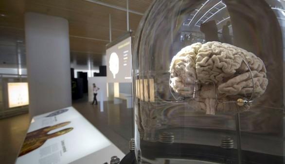 La Fundación Telefónica organiza una charla en la que analizará a fondo las curiosidades del cerebro