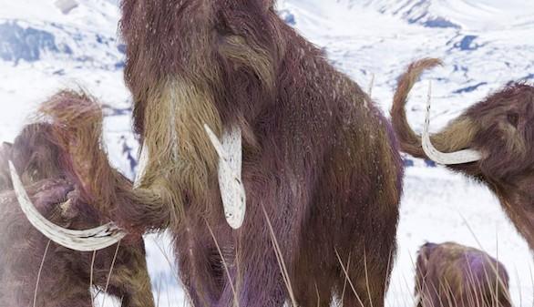Los mamuts se extinguieron tras un abrupto calentamiento global