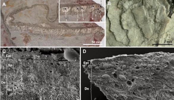 Descifran por primera vez el color de una serpiente de hace 10 millones de años